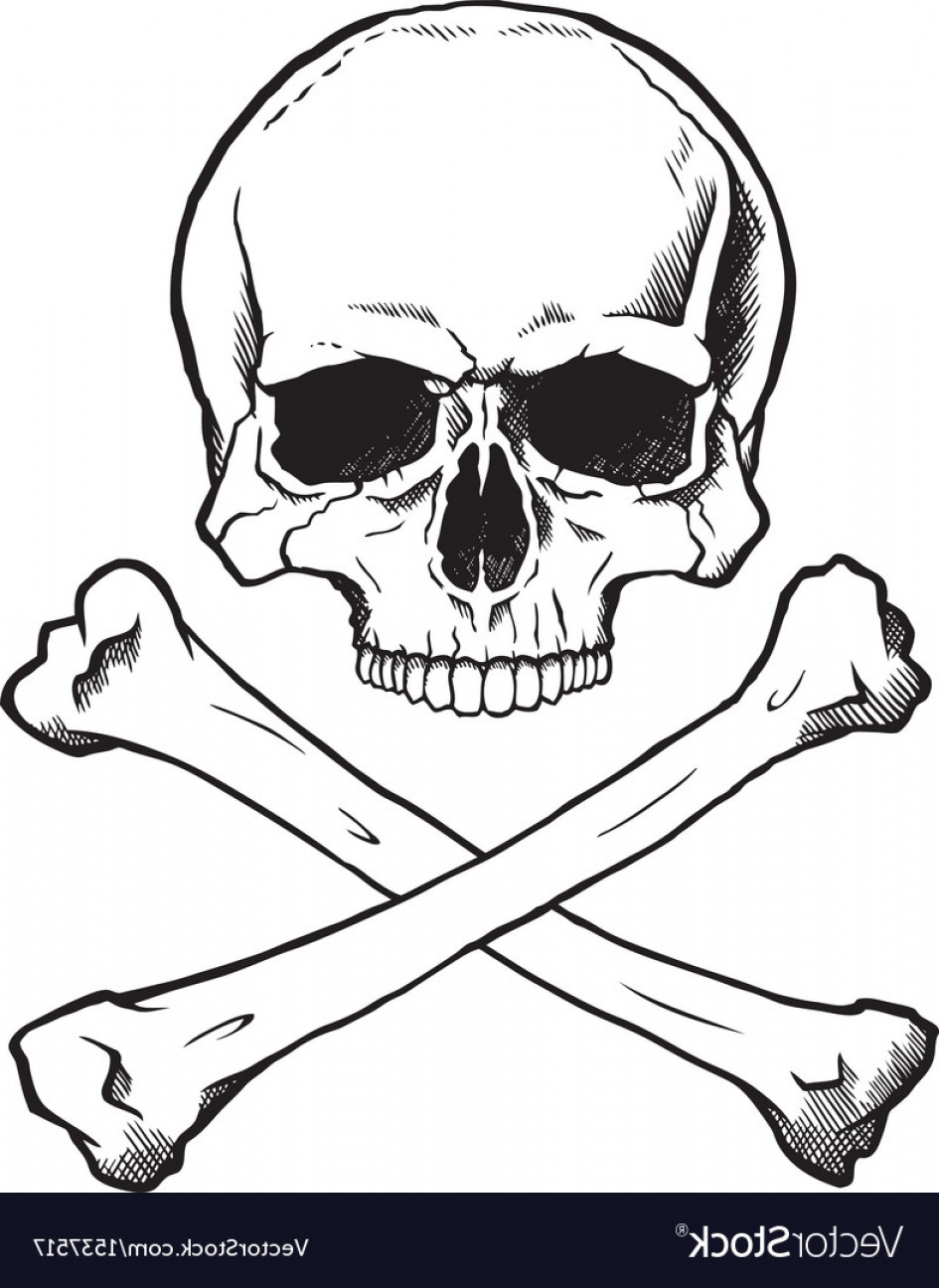 Skull ND Crossbones Vector: Blackwhite Human Skull And Crossbones Vector