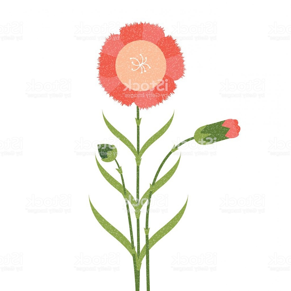 Vector Image Of A Budding Flower: Blooming And Budding Carnation Flower Gm