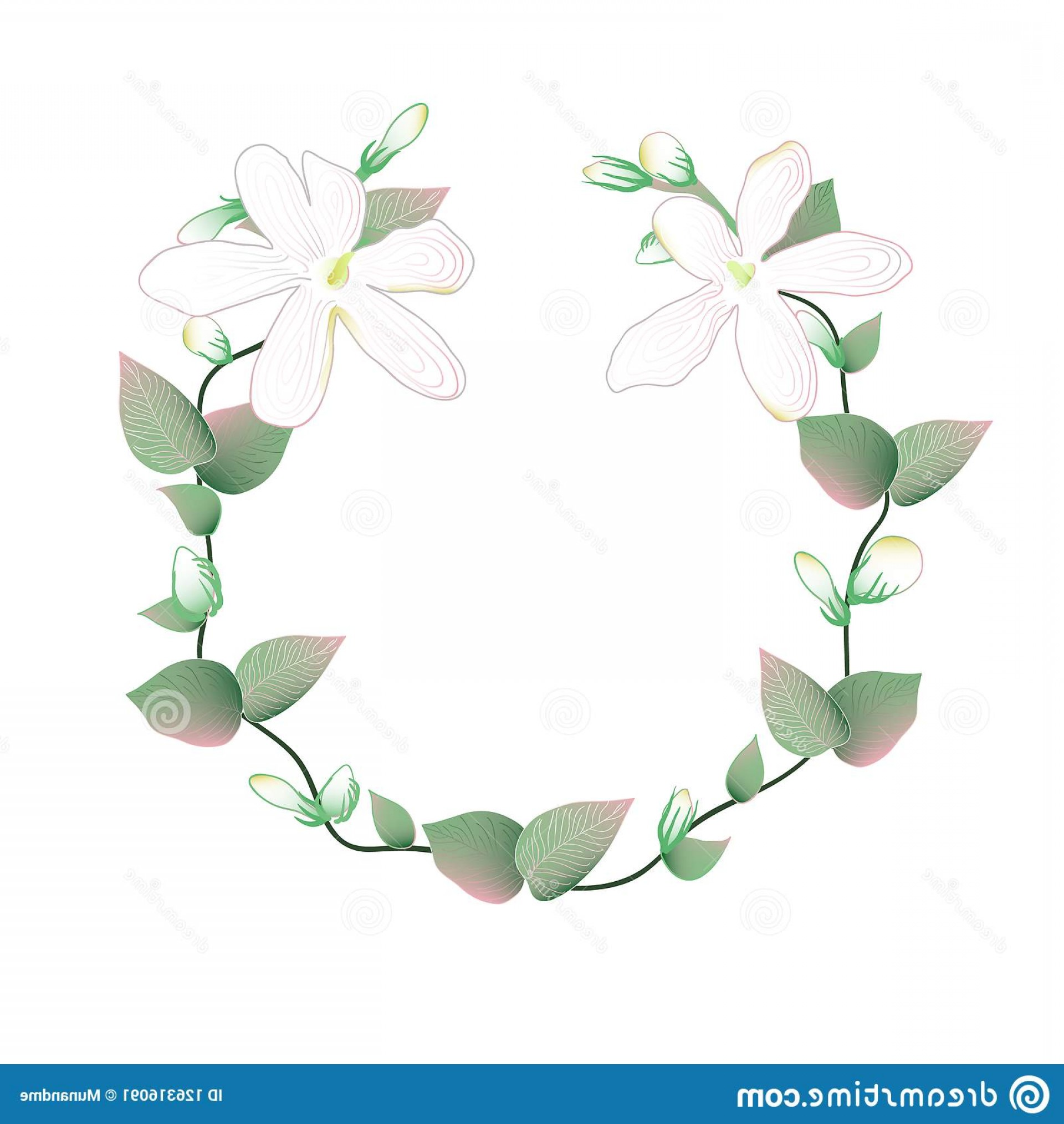 Vector Image Of A Budding Flower: Blooming Budding Jasmine Flowers Wreath White Image