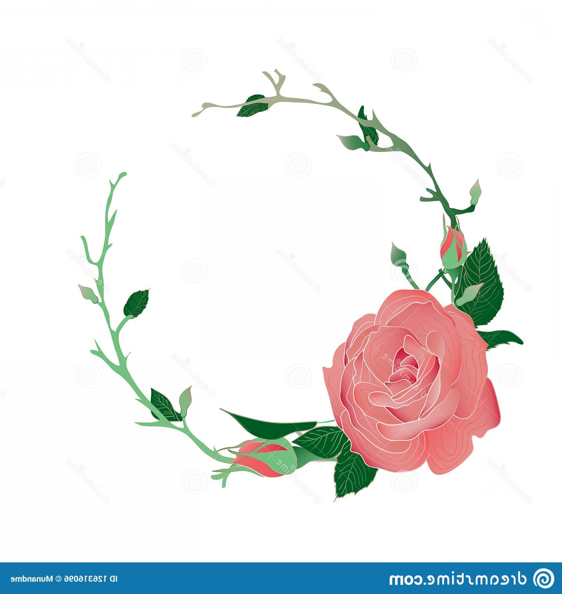 Vector Image Of A Budding Flower: Blooming Budding Pink Rose Flowers Leaves Wreath Blooming Budding Pink Rose Flowers Wreath Image