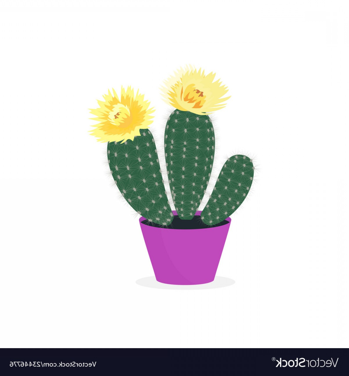 Potted Cactus Plant Vector: Blooming Cacti Cactus In A Pot Potted Home Plant Vector