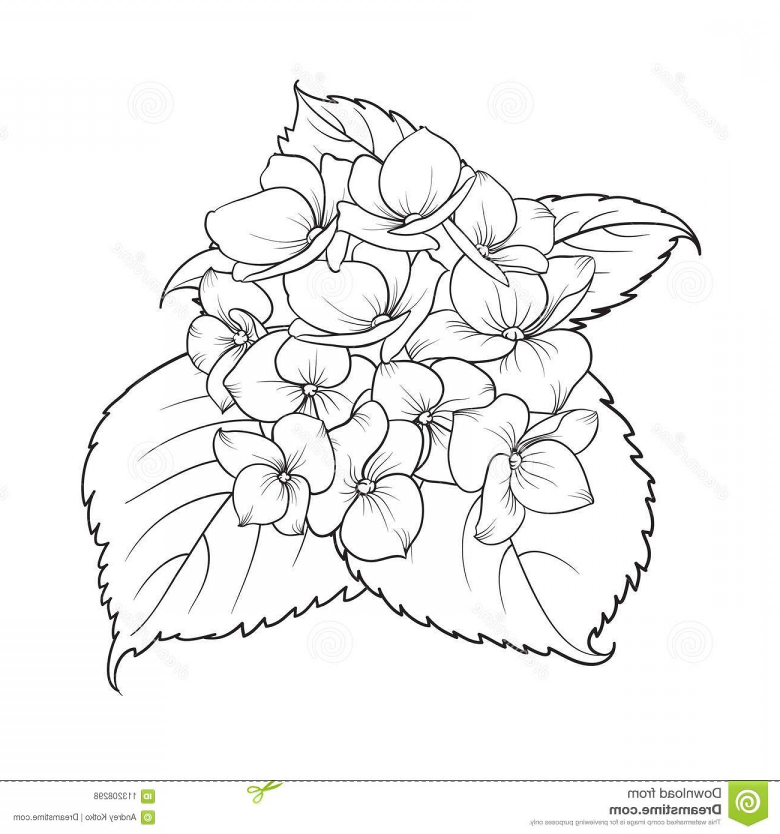 Vector Mop Flower: Blooming Flower Hydrangea White Background Mop Head Hydrangea Flower Isolated Against White Beautiful Flowers Style Image