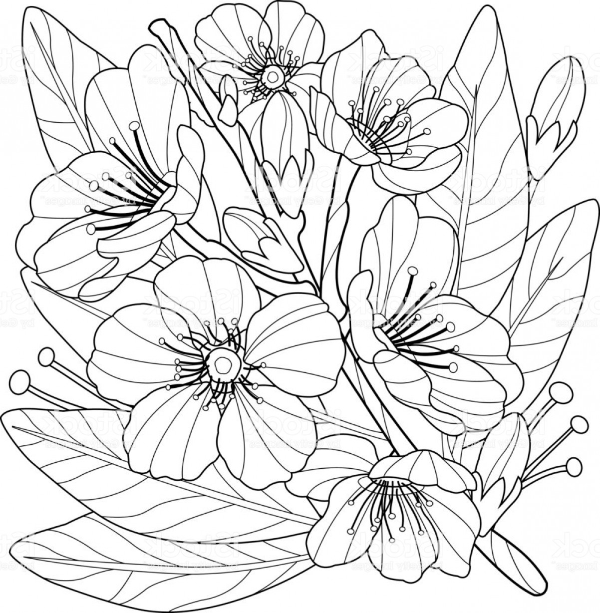 Almond Tree Vector: Blossoming Almond Tree Branch With Flowers Coloring Book Page Gm