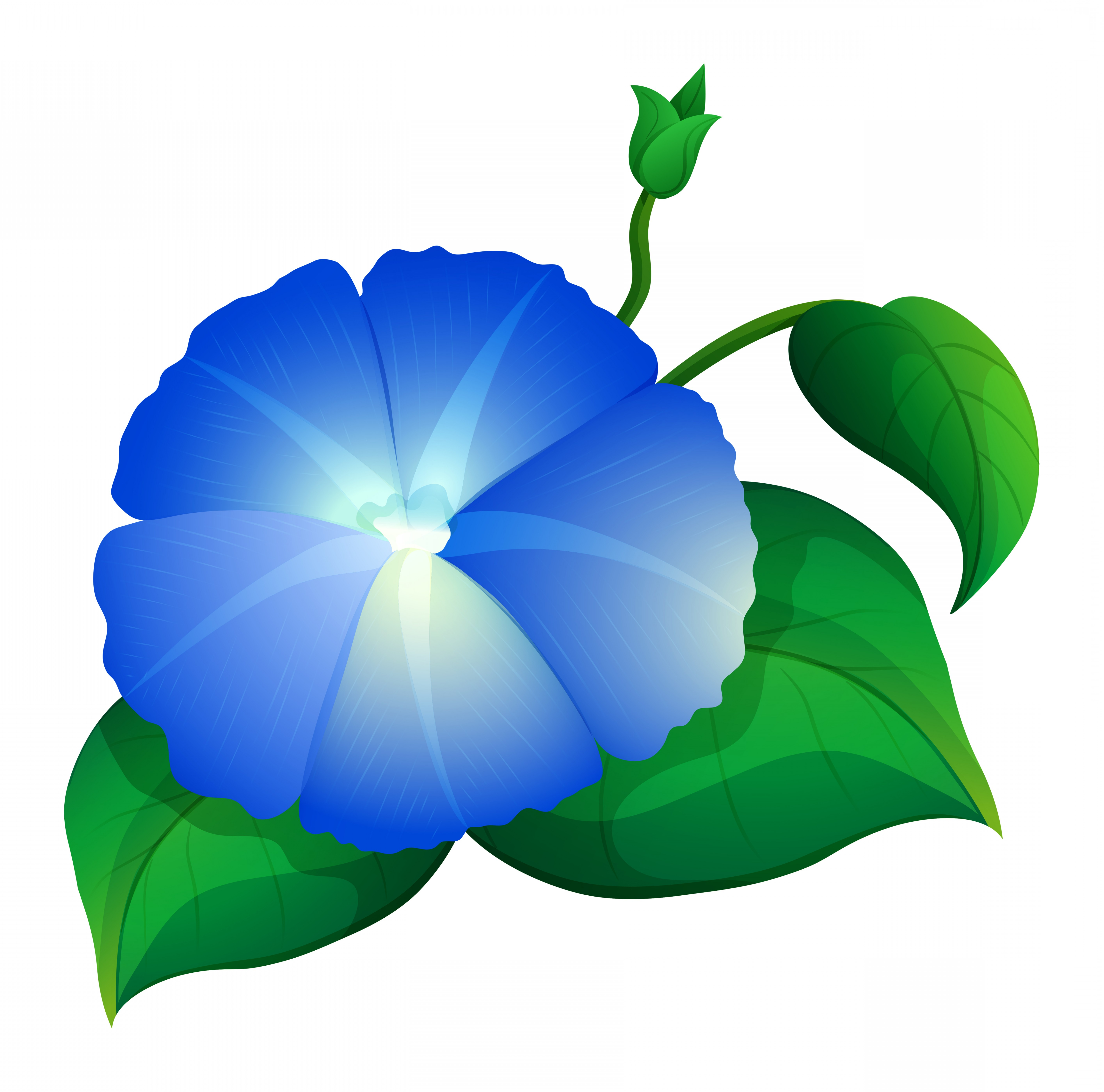 Morning Glory Transparent Vector: Blue Morning Glory Flower With Green Leaves