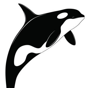 Vector Black And White Whale: Black White Whale Classic Flat Icon
