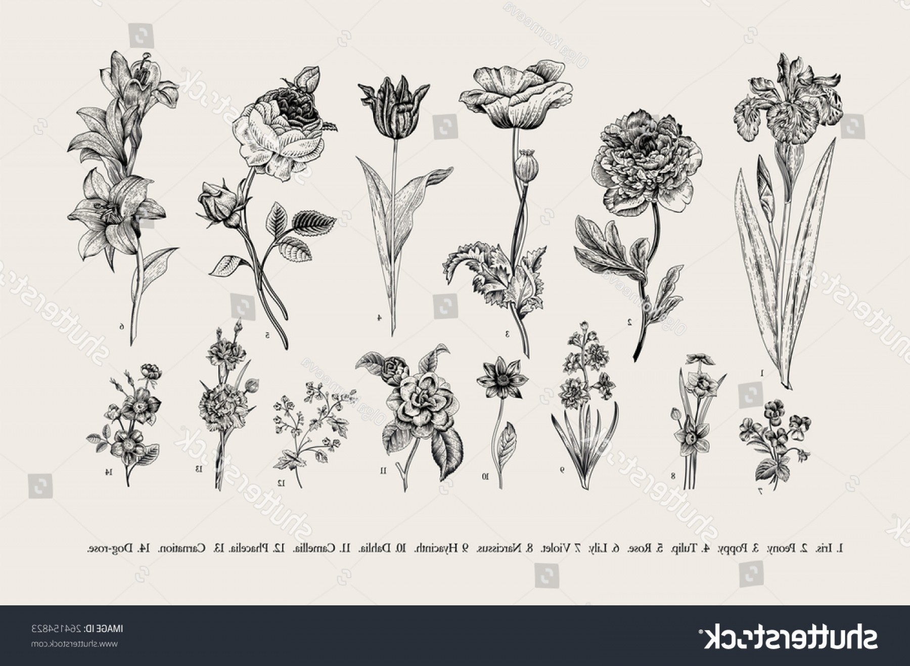Botanical Flower Vectors: Botany Set Vintage Flowers Black White