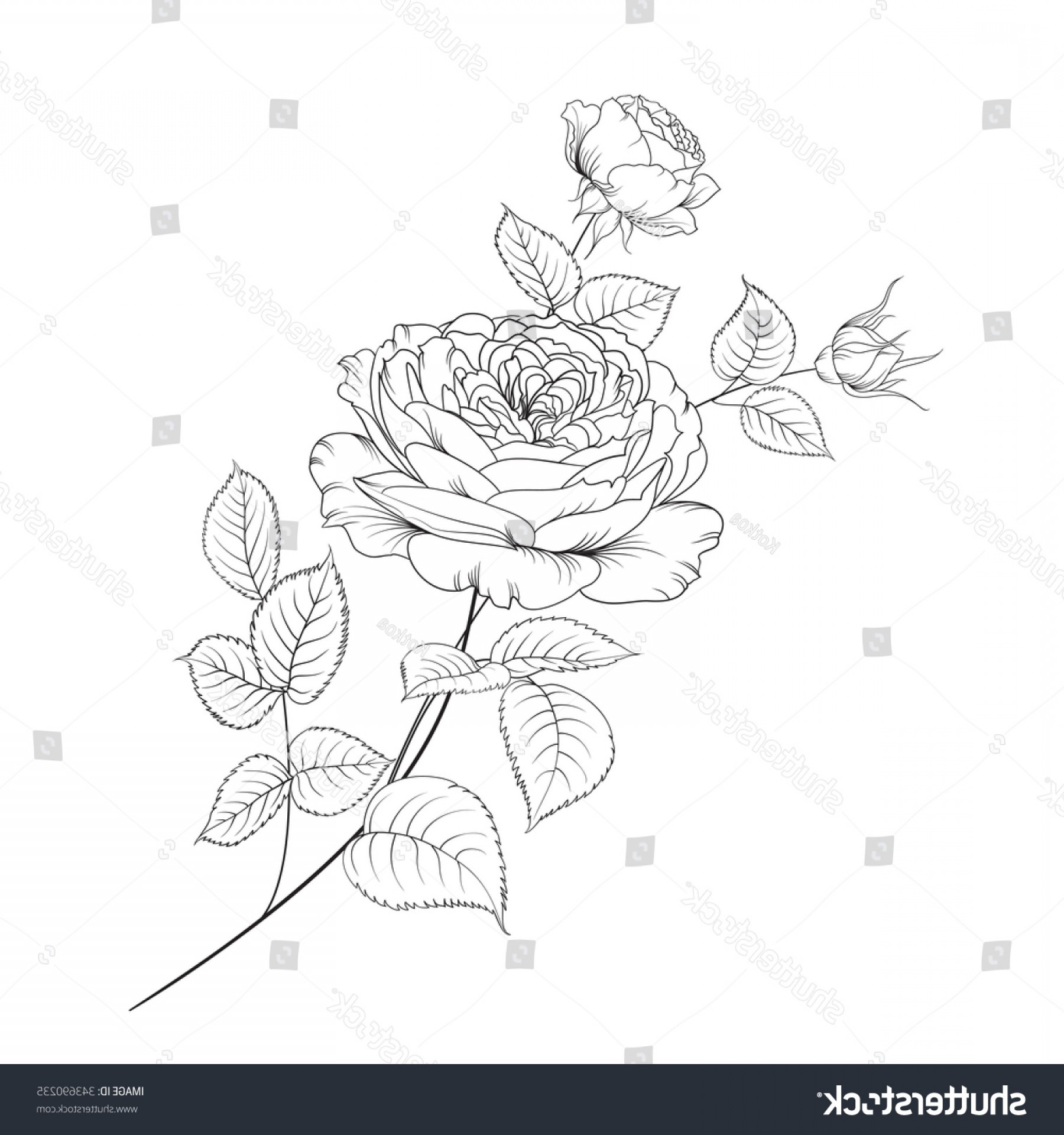 Vector Mop Flower: Bouquet Roses Isolated On White Background