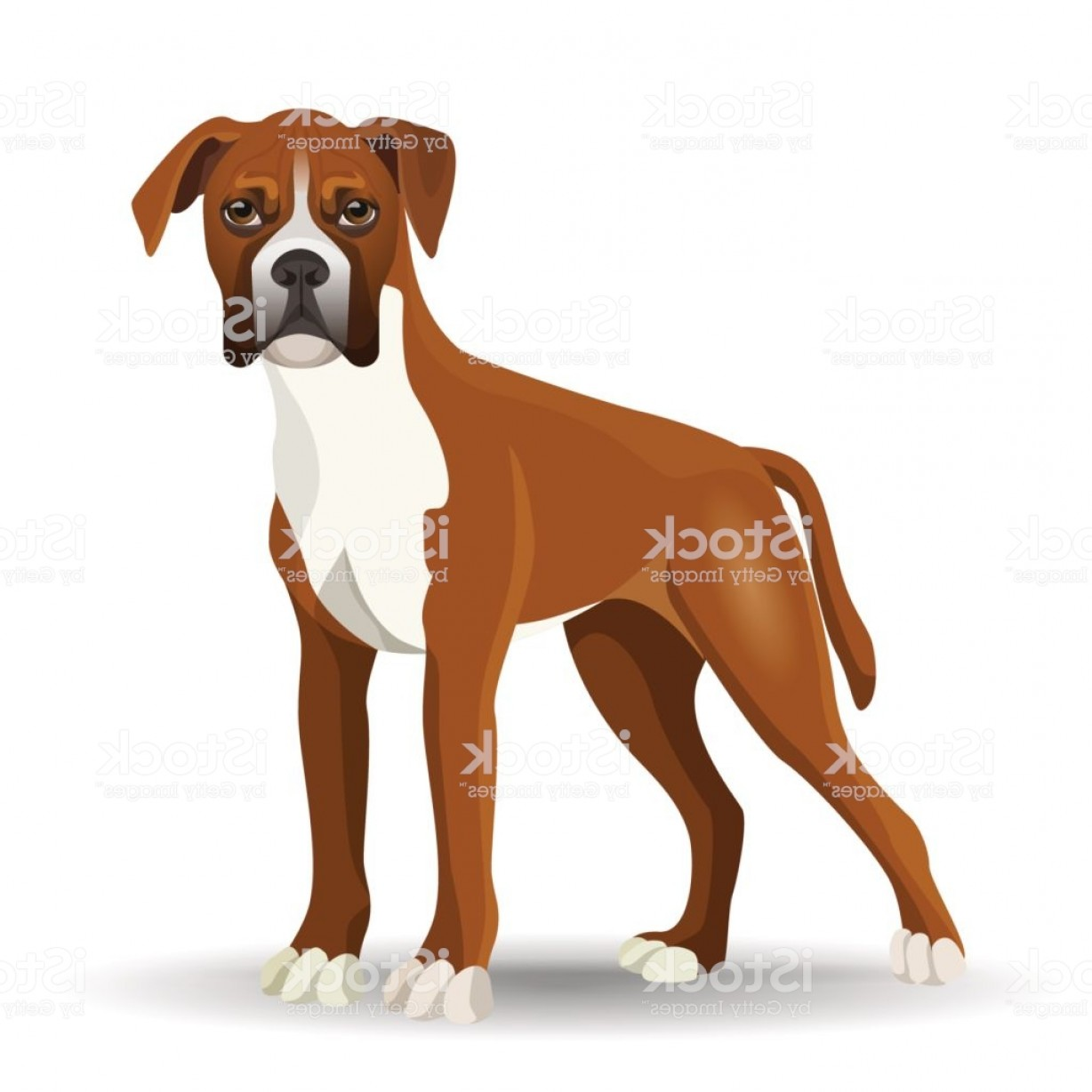 Bpxer Vector Art Happy Dog: Boxer Dog Full Length Vector Illustration Isolated On White Gm
