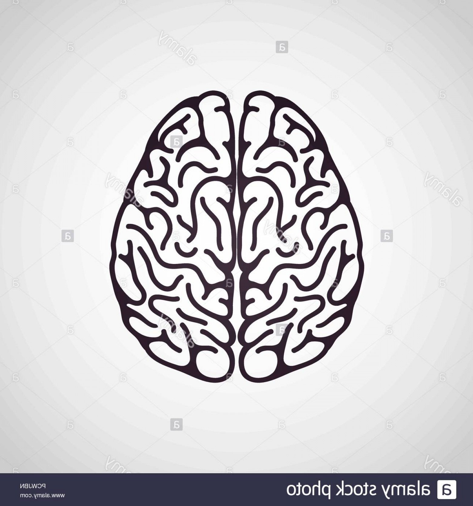 Brain Vector Art: Brain Vector Logo Icon Illustration Image
