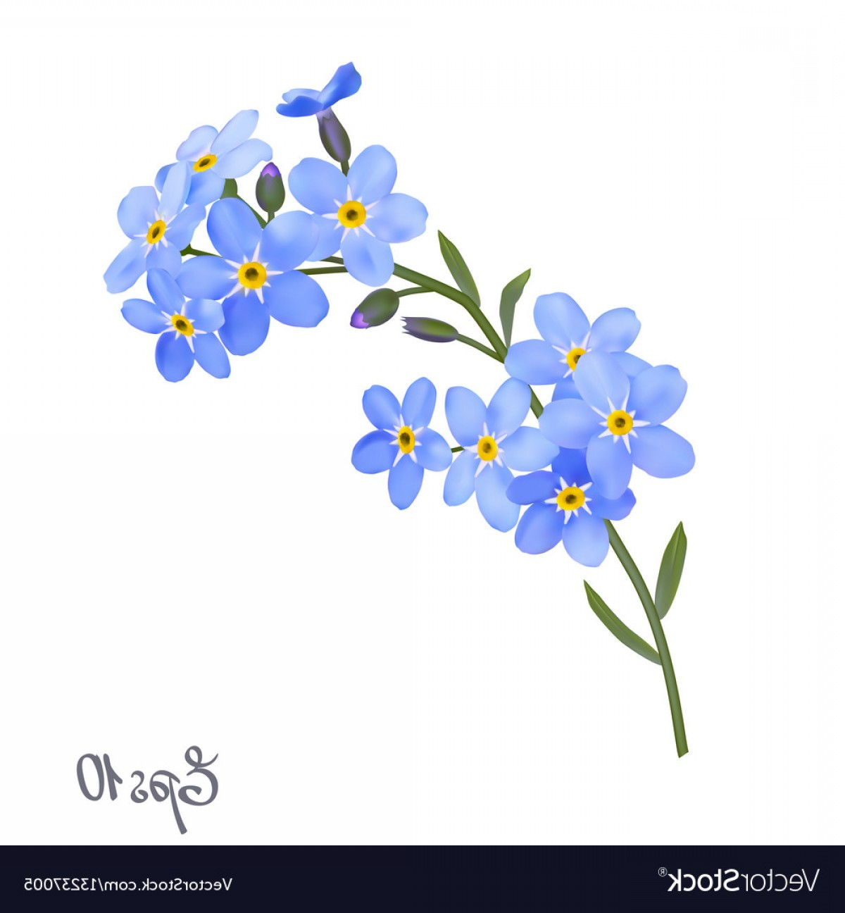 Get For Me Not Flower Watercolor Vector Art: Branch Of Blue Forget Me Not Flowers Vector