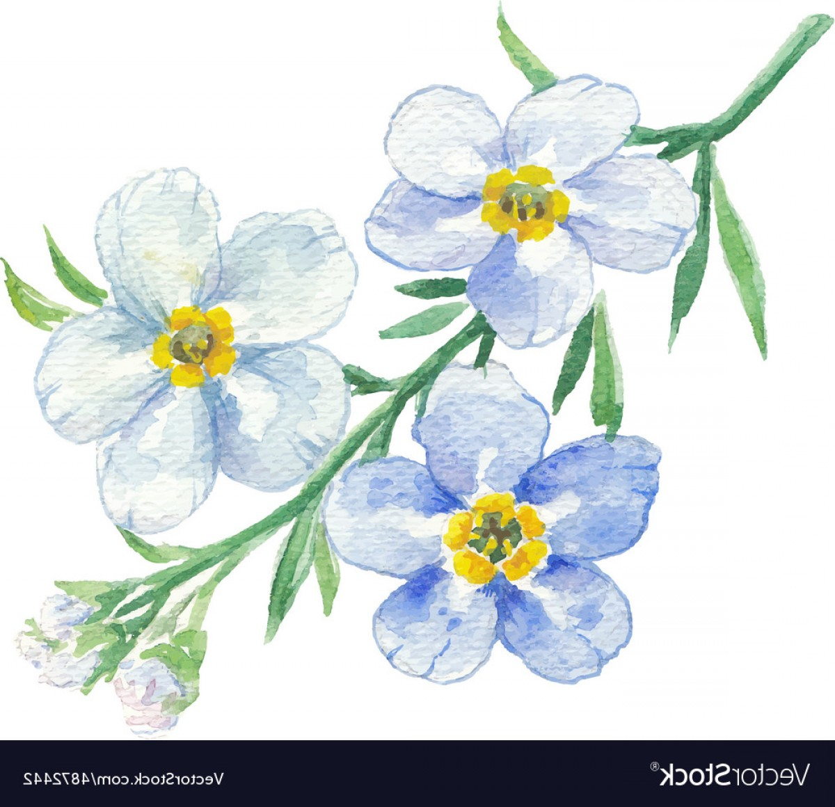 Get For Me Not Flower Watercolor Vector Art: Branch Of Blue Forget Me Not Vector