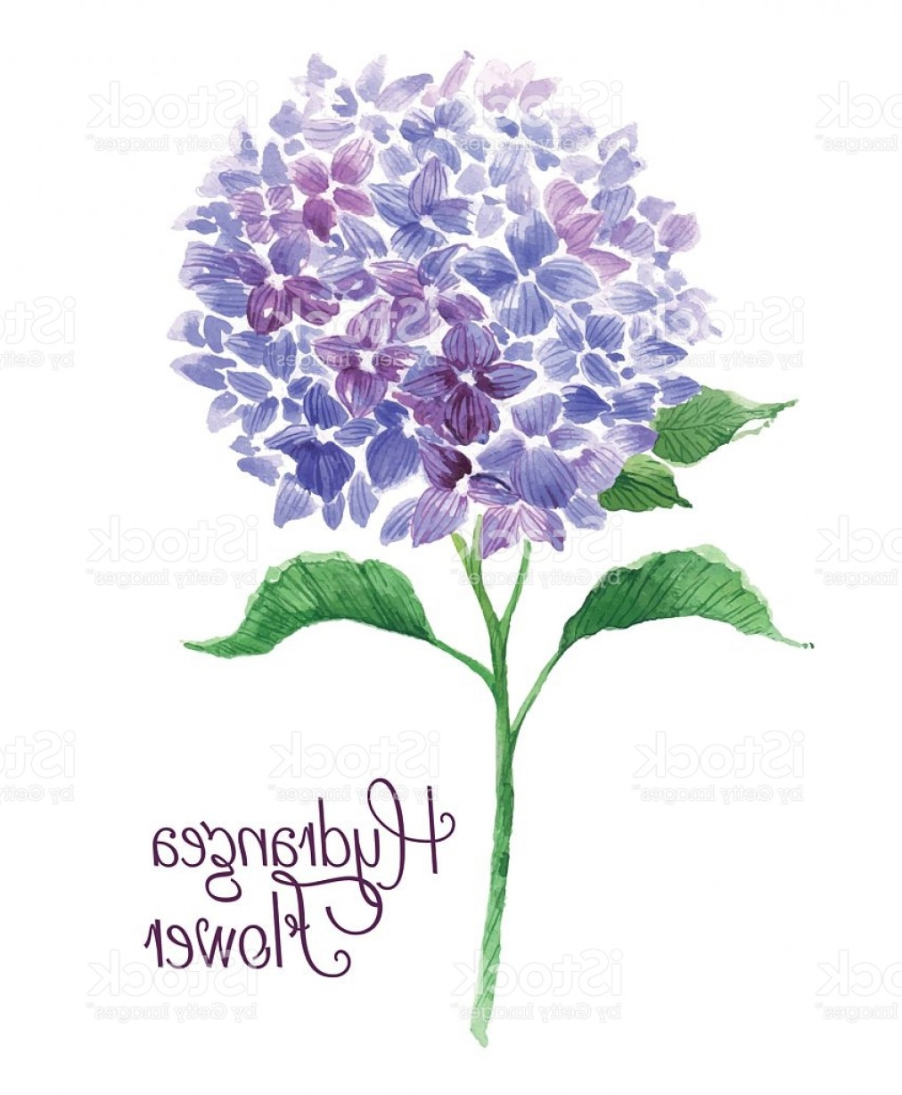 Hydrangea Vector Graphics: Branch Of Blue Hydrangea Gm