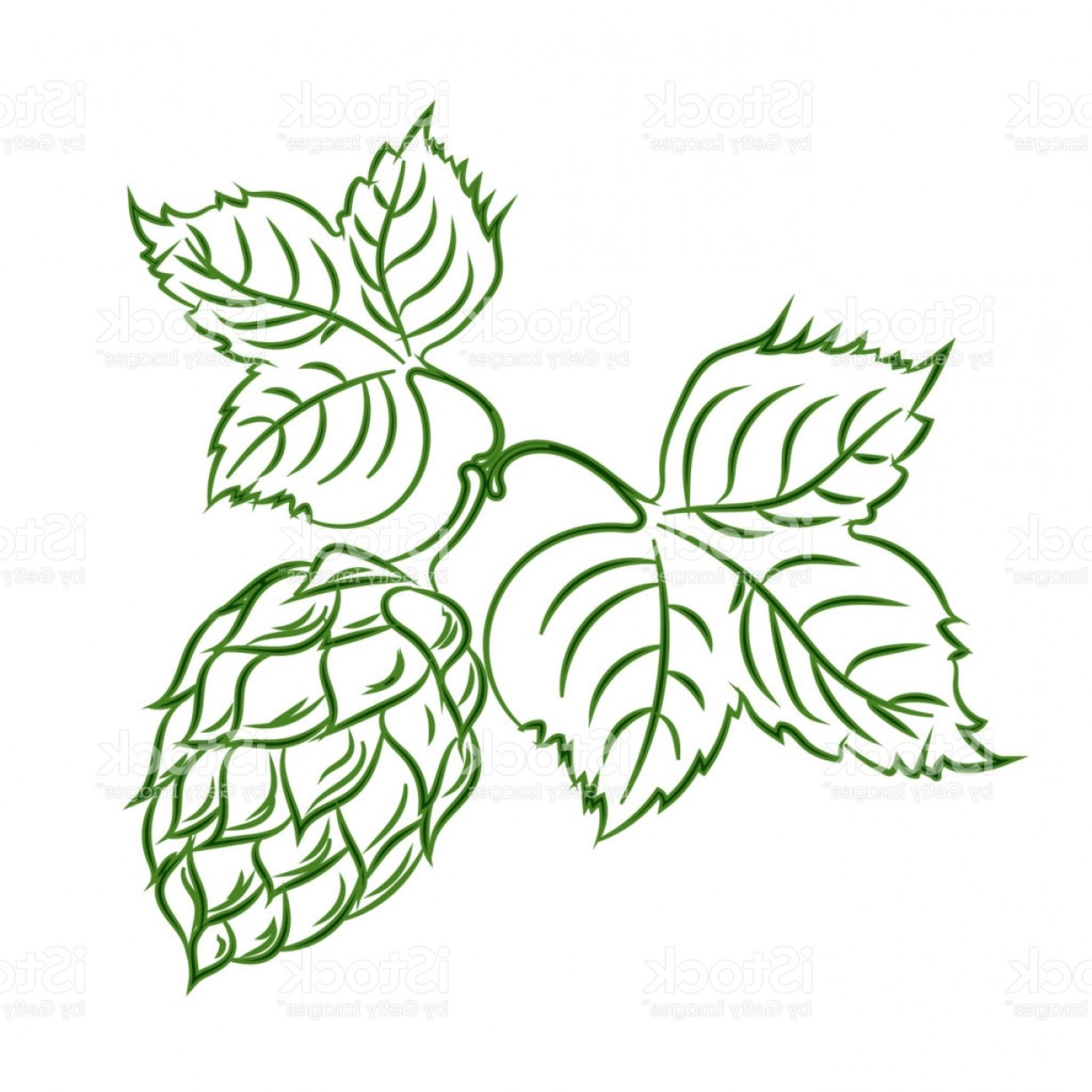 Hops Vector Art: Branch Of Hops With Cones Brewing Agriculture Gm