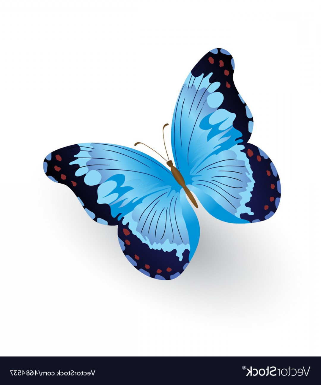 Real Butterfly Vector: Bright Blue Butterfly Isolated Vector