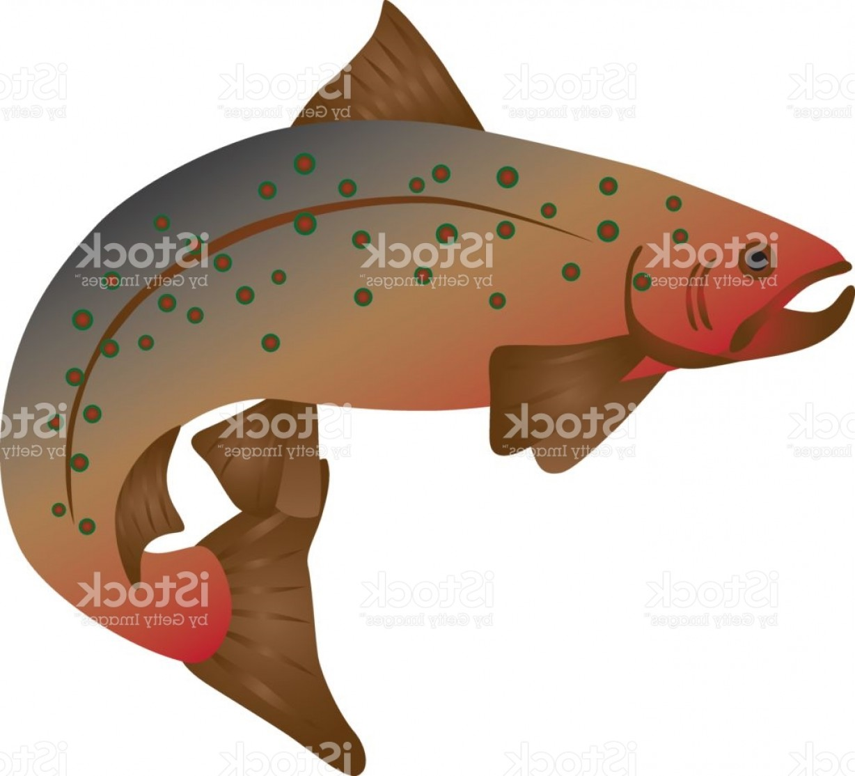 Speckled Trout Vector: Brook Trout Color Illustration Gm