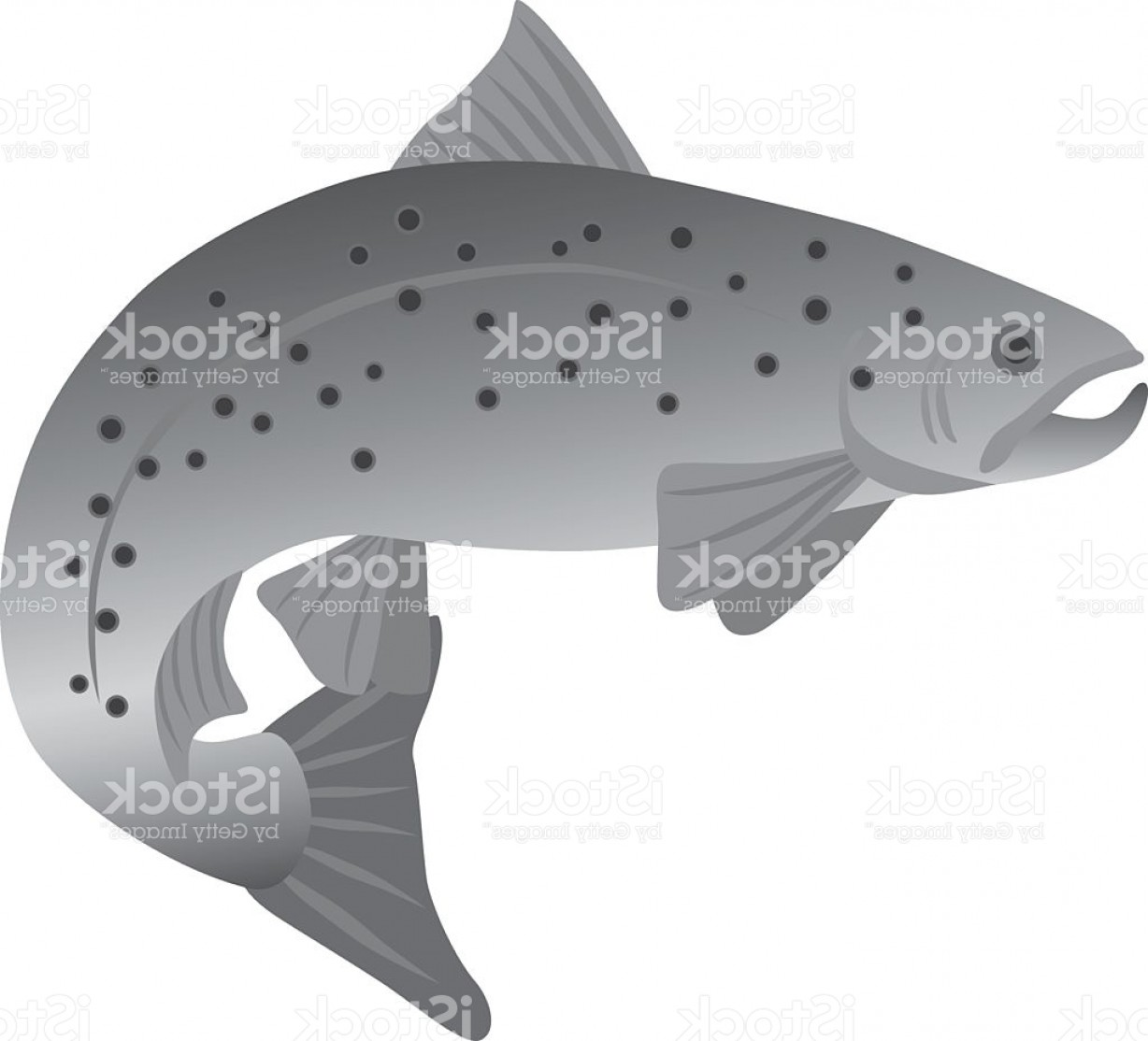 Speckled Trout Vector: Brook Trout Grayscale Vector Illustration Gm