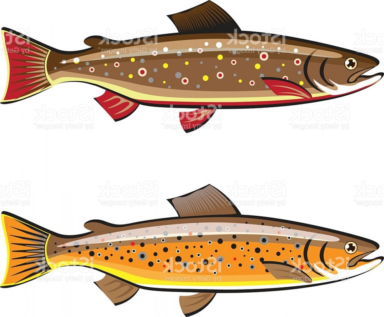 Speckled Trout Vector: Brown And Brook Trout Fish Vector Gm