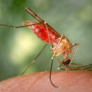 Journal Of Vector Borne Diseases: Breakthrough Technique Eradicates Mosquitoes