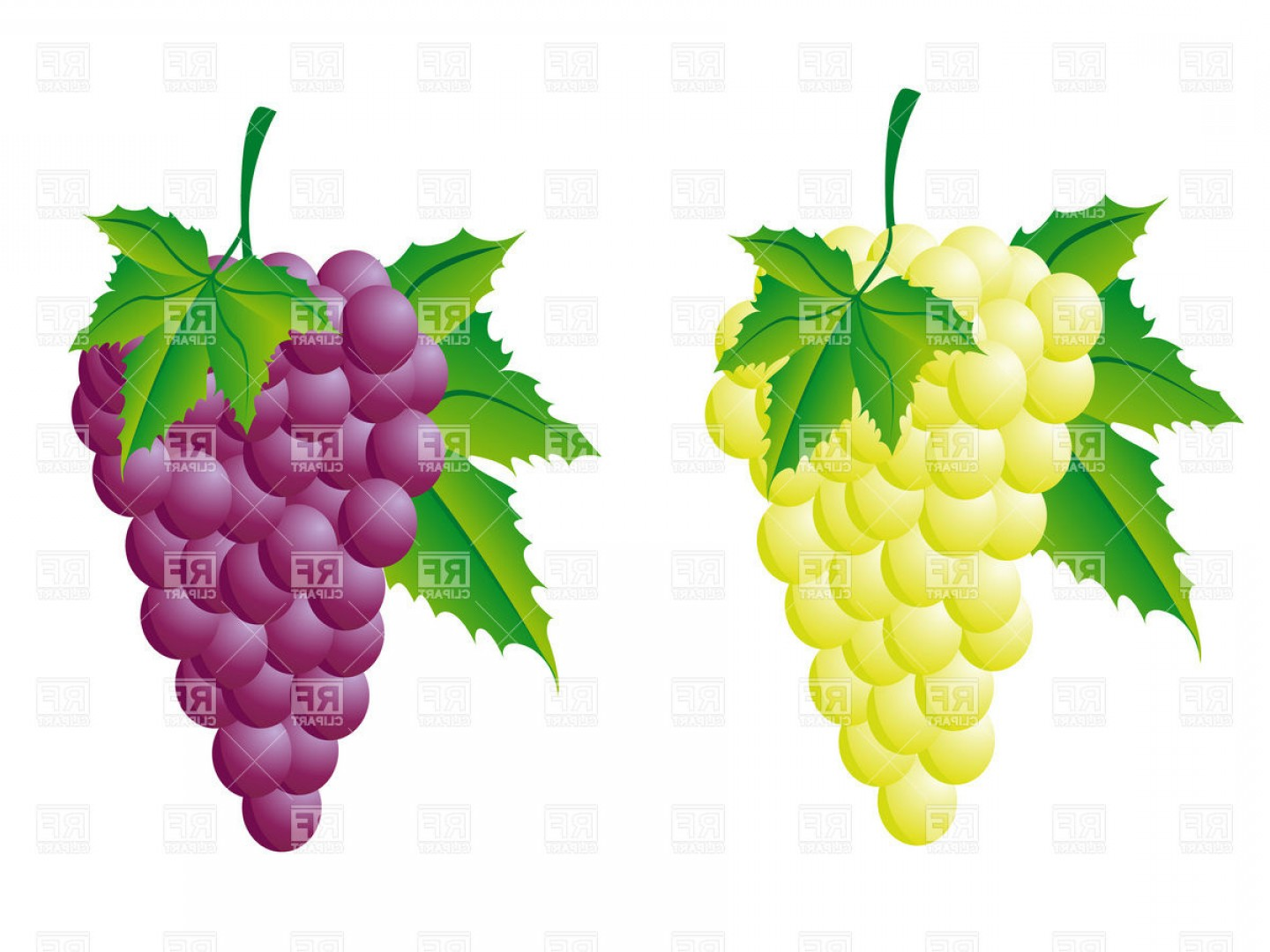 Grapes Clip Art Vector: Bunch Of Grapes With Leaves Red And White Vector Clipart