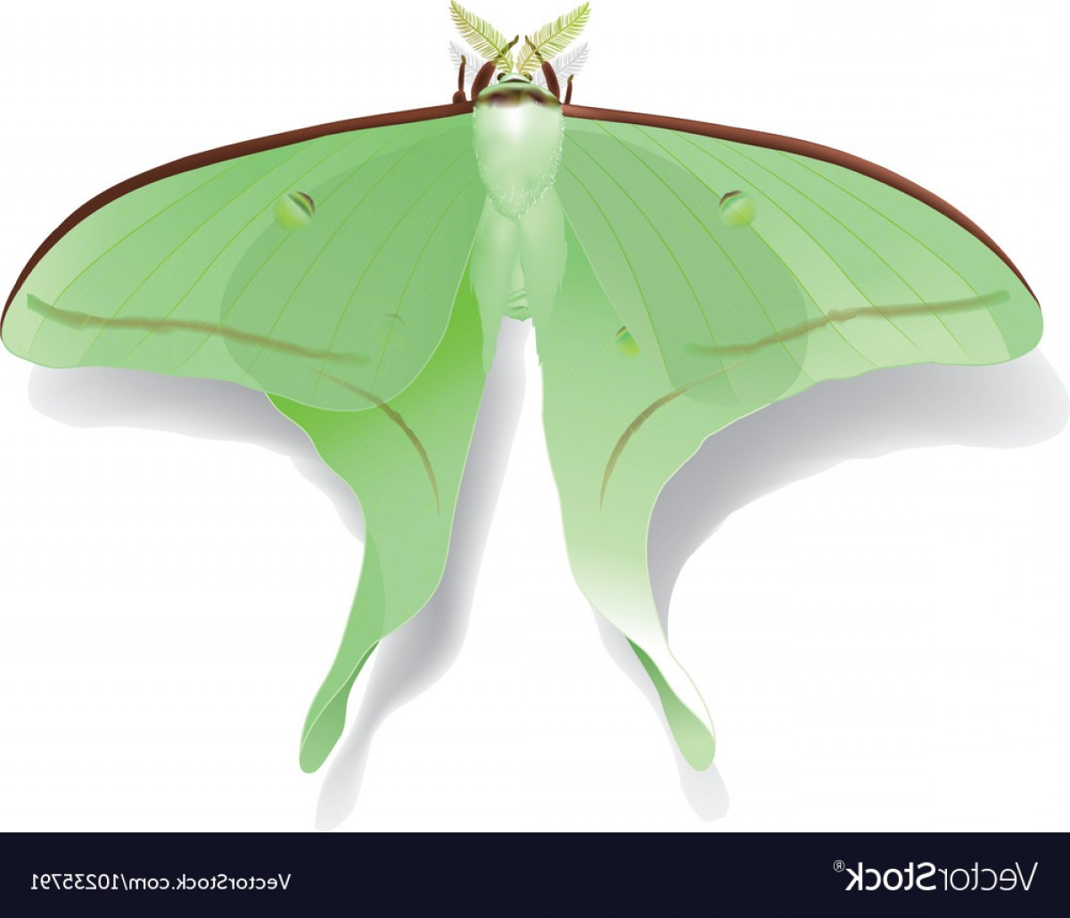 Vector Luna Moth: Butterfly Artemis On White Vector