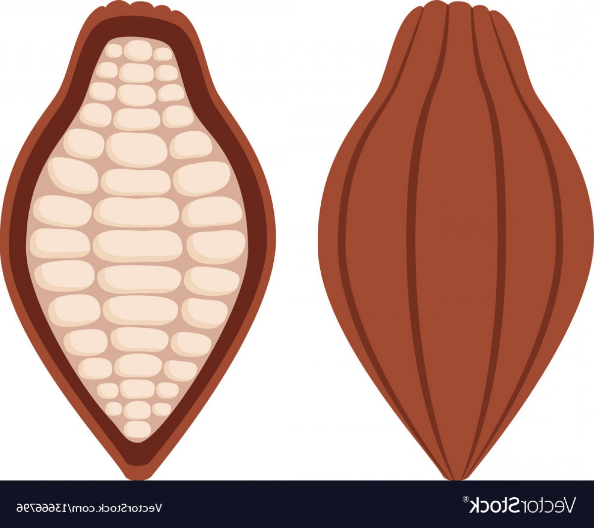 Chocolate Vector Plant: Cacao Beans Brown Organic Plant Fruit Of Chocolate Vector