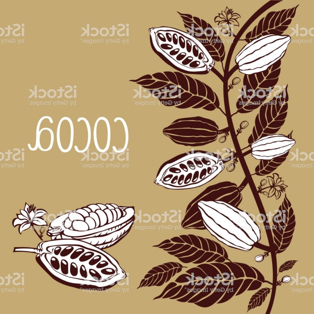 Chocolate Vector Plant: Cacao Beans Plant Vector Exotic Cacao Plants Gm