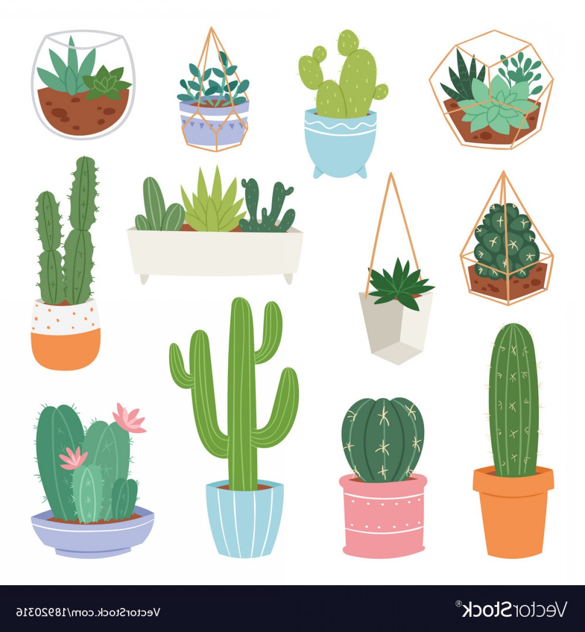 Potted Cactus Plant Vector: Cactus Cartoon Botanical Cacti Potted Cute Vector