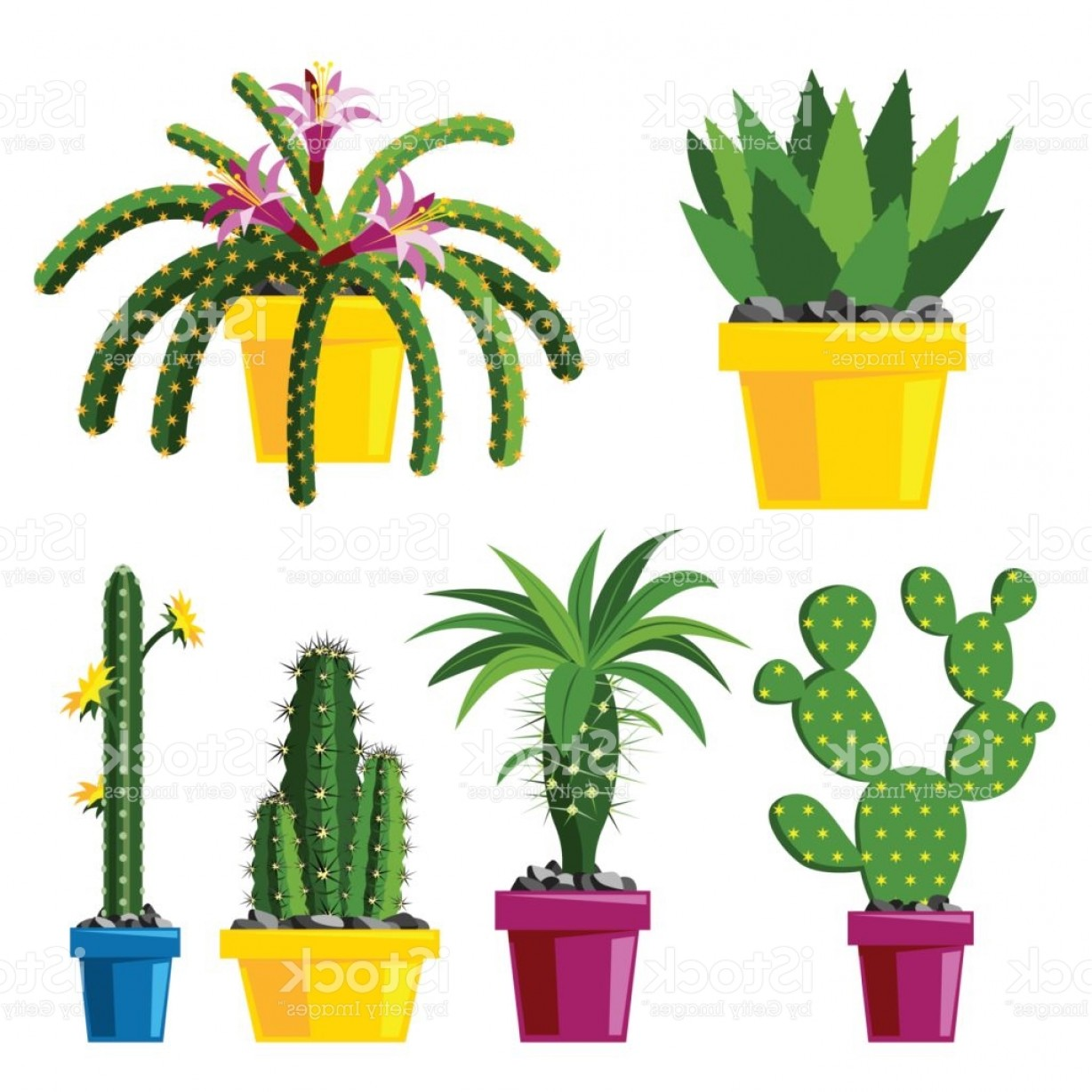 Cactus And Flower Vector: Cactus Flat Style Nature Desert Flower Green Cartoon Drawing Graphic Mexican Gm