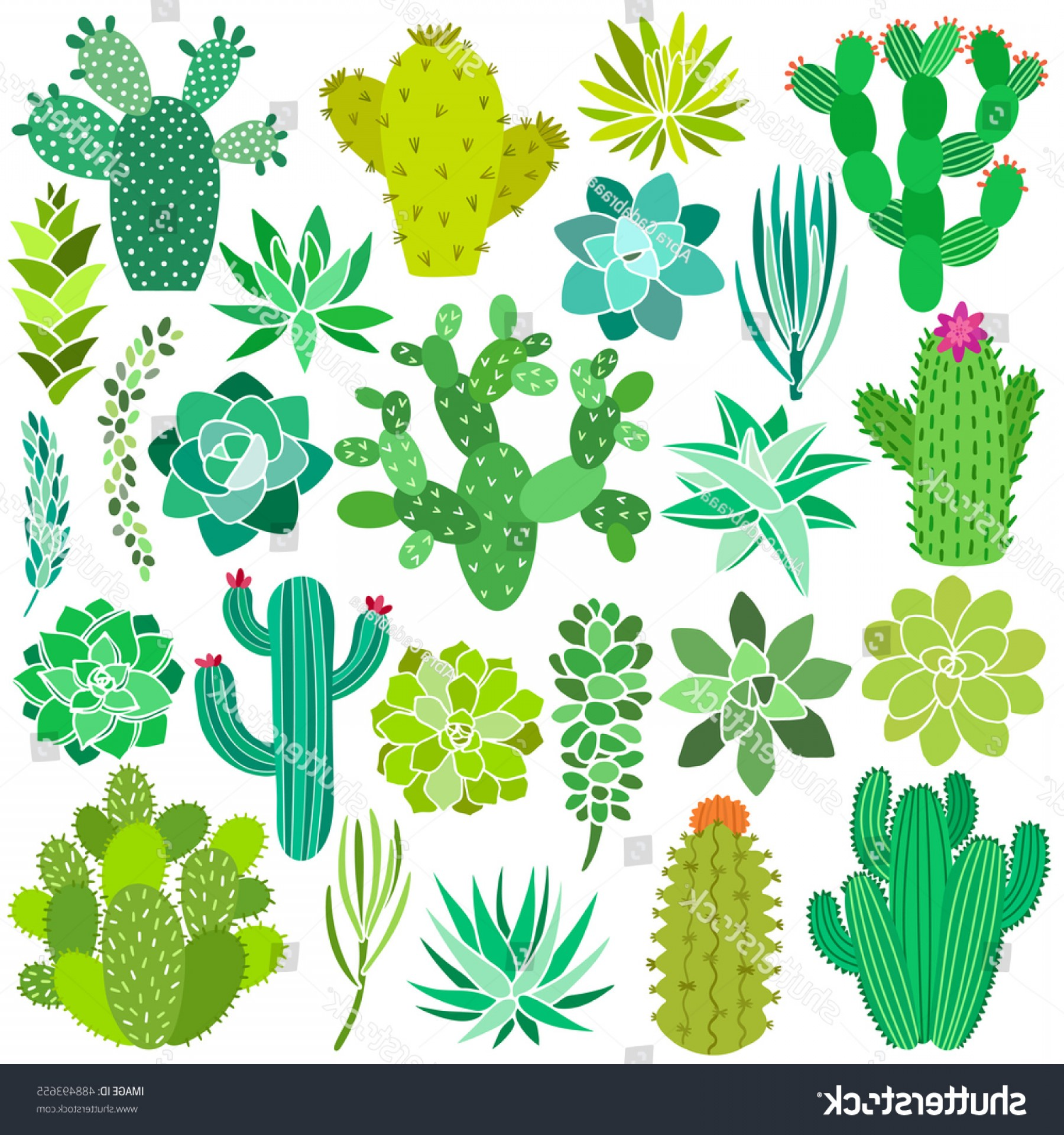 Cactus And Flower Vector: Cactus Succulent Flower Vector Illustrations Hand