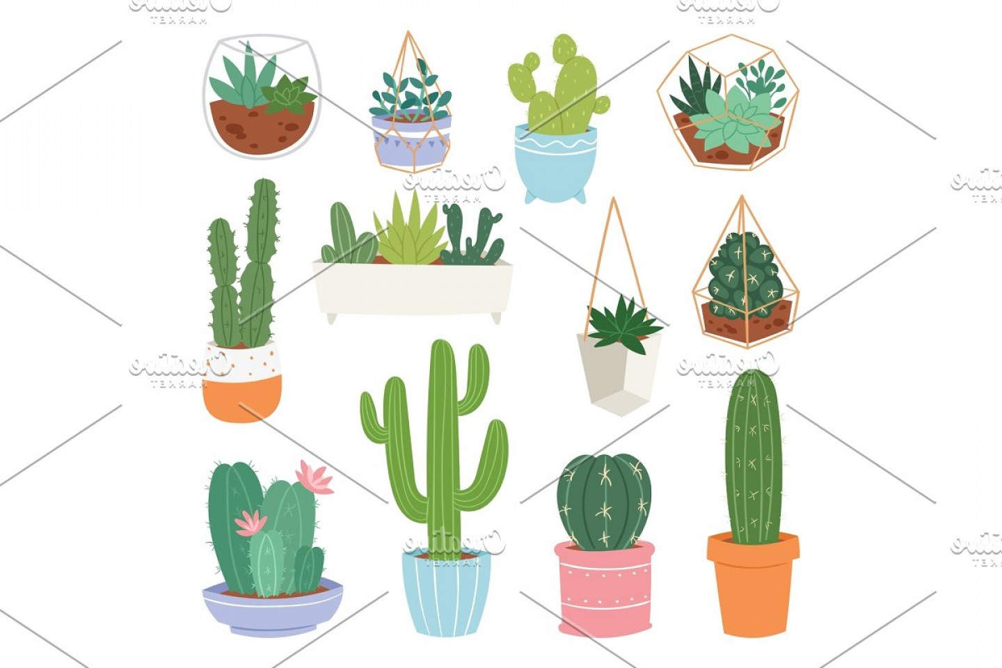Potted Cactus Plant Vector: Cactus Vector Cartoon Botanical Cacti Potted Cute Cactaceous Succulent Plant Botany Illustration Isolated On White Background