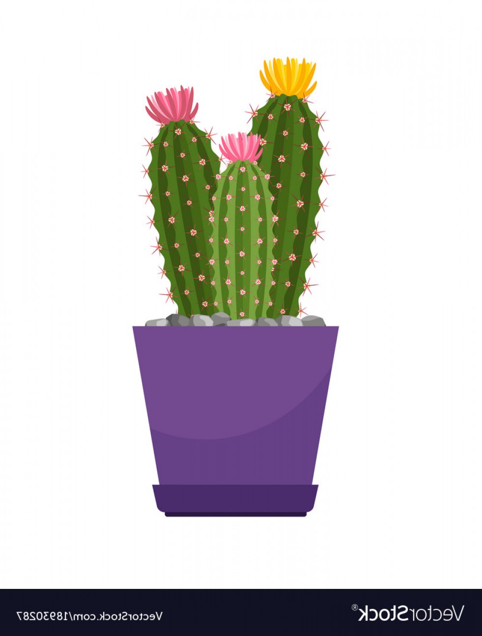 Cactus And Flower Vector: Cactus With Flowers House Plant Vector