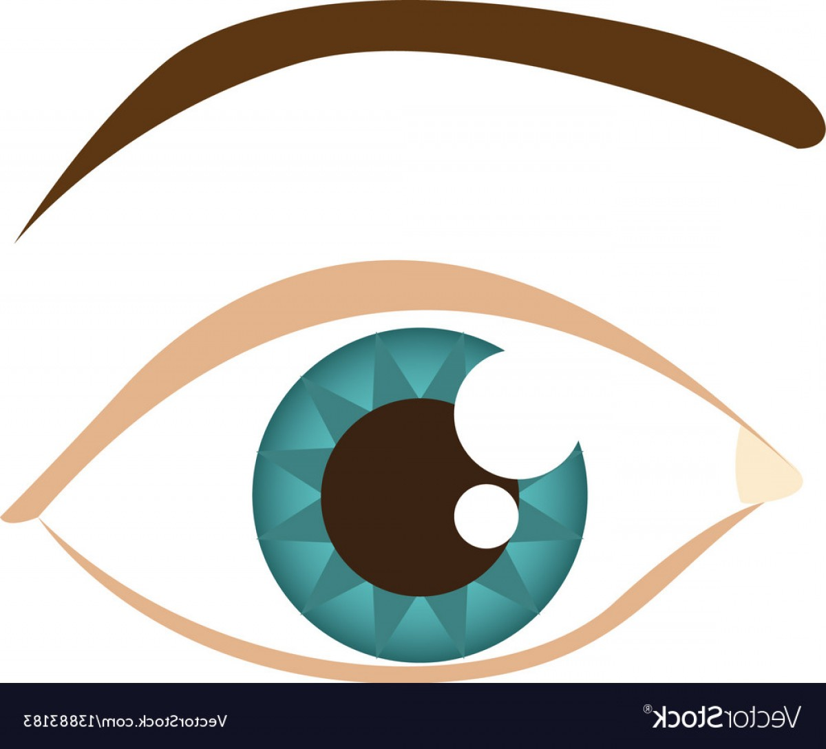 Male Eyes Vector Graphic: Cartoon Human Male Eye With Eyebrow Vector
