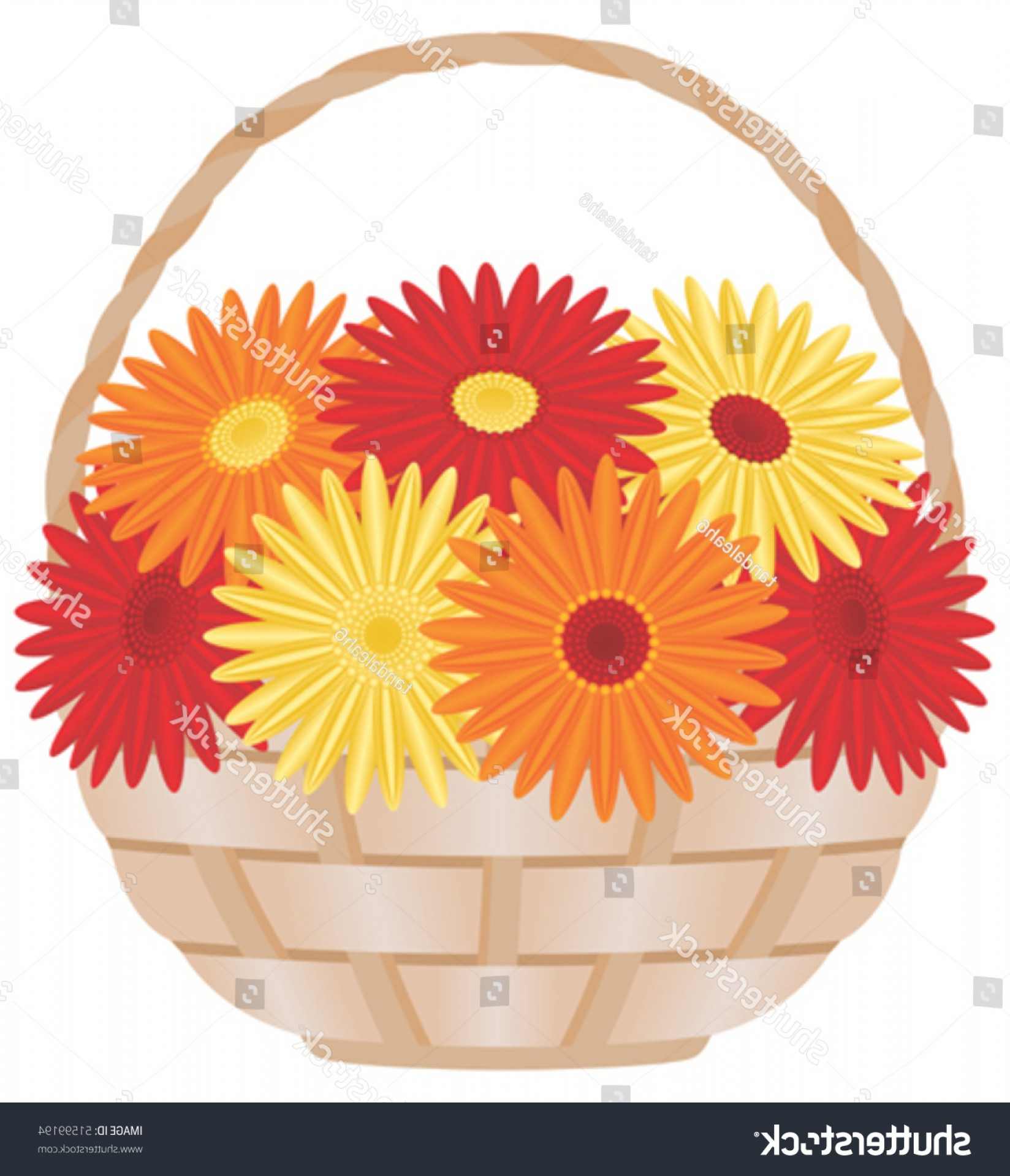 Orange Gerber Daisy Vector: Catchy Gerber Daisies Basket Vector