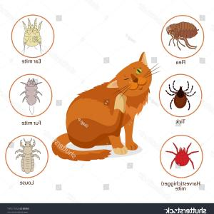 Parasites Vectors: Cat Parasites Pet Skin Fur Vector