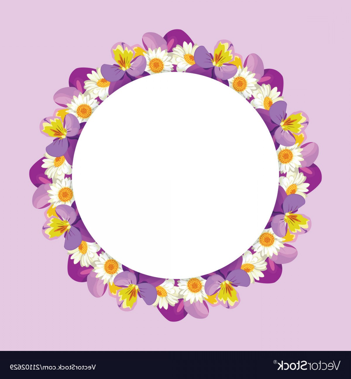Purple Gerber Daisy Vector Framw: Chamomile And Pansies Frame On Pink Purple Vector