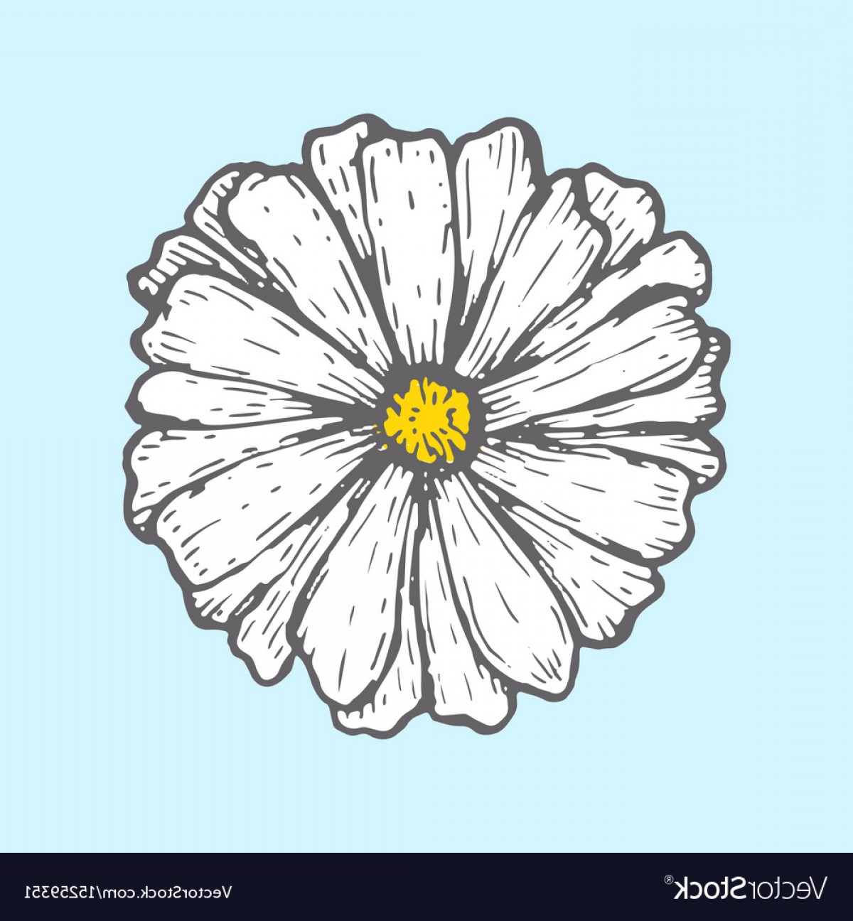 Simple Vector Daisy: Chamomile Isolated On Blue Background Simple Vector