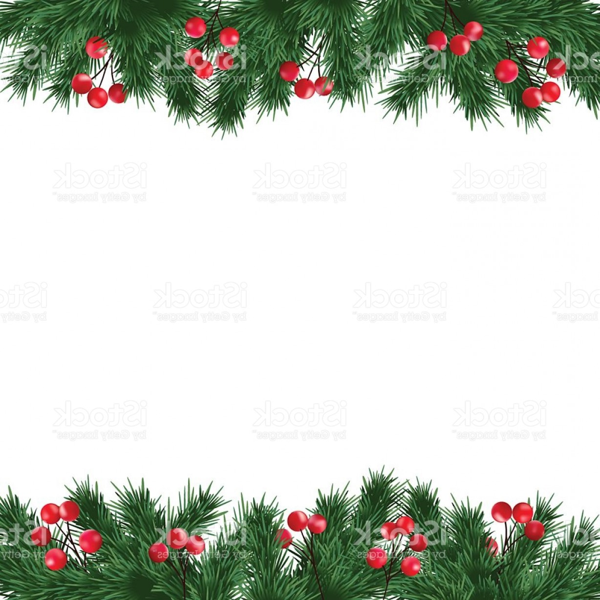 Holly Berry Vector Border: Christmas Greeting Card Fir Tree Branches And Holly Berries Border Gm