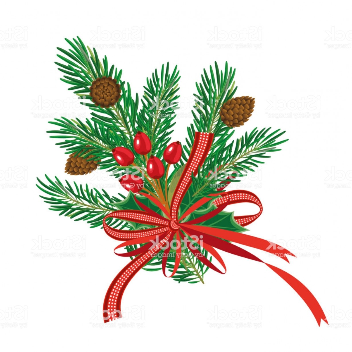 Pine Leaves Vector: Christmas Pine Branches With Red Ribbon And Pine Cone Mistletoe Berries And Leaves Gm