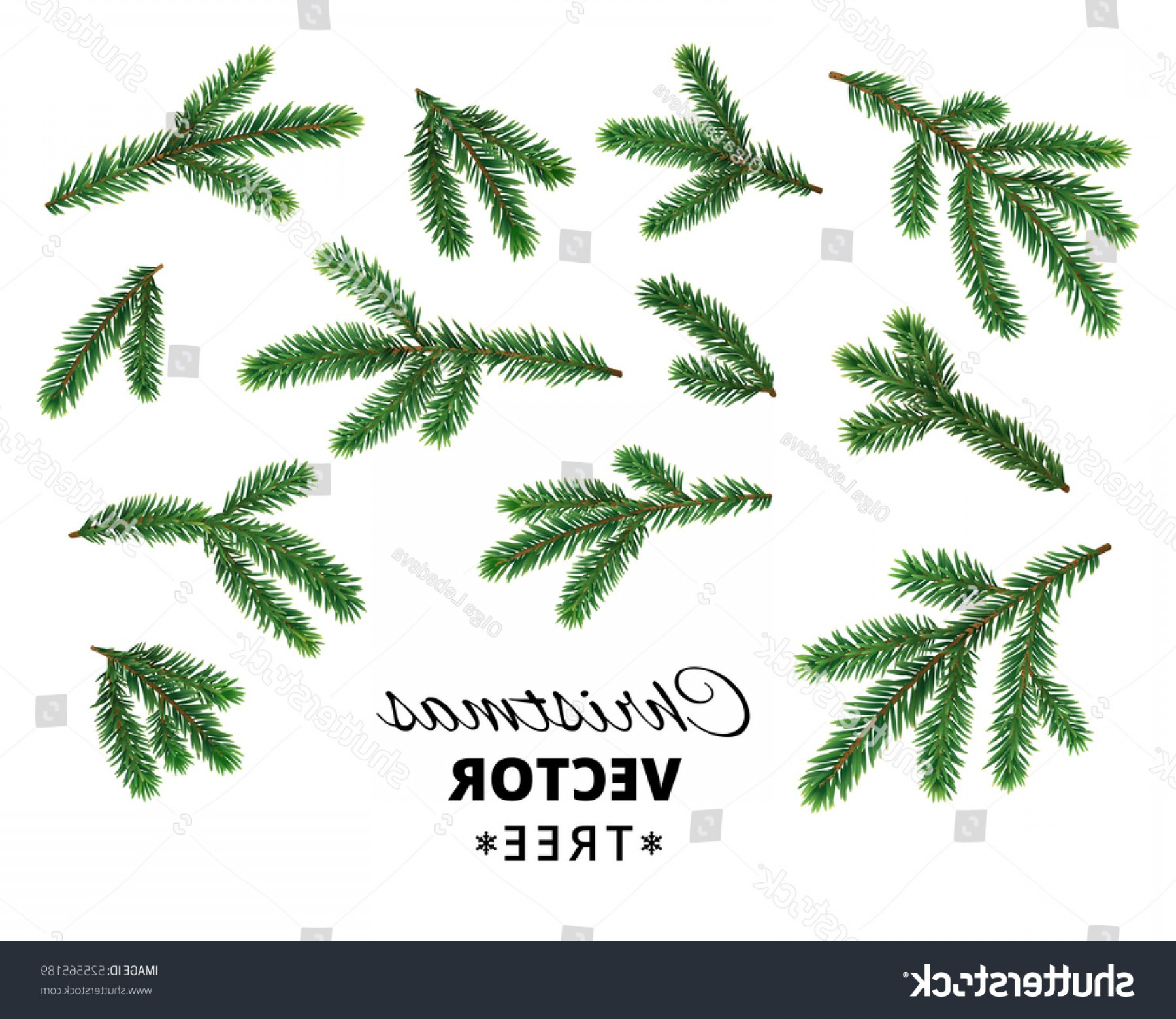 Pine Leaf Vector: Christmas Tree Branches Isolated On White