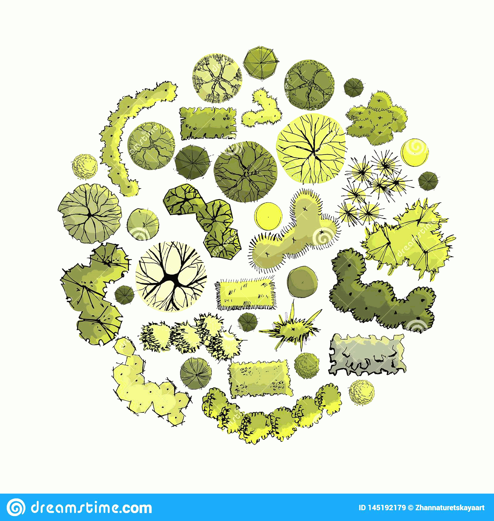 Vector Tree Symbols Plan: Circle Composition Symbols Trees Shrubs Plan View Whithout Shadow Hand Drawn Ink Colored Sketch Isolated Image