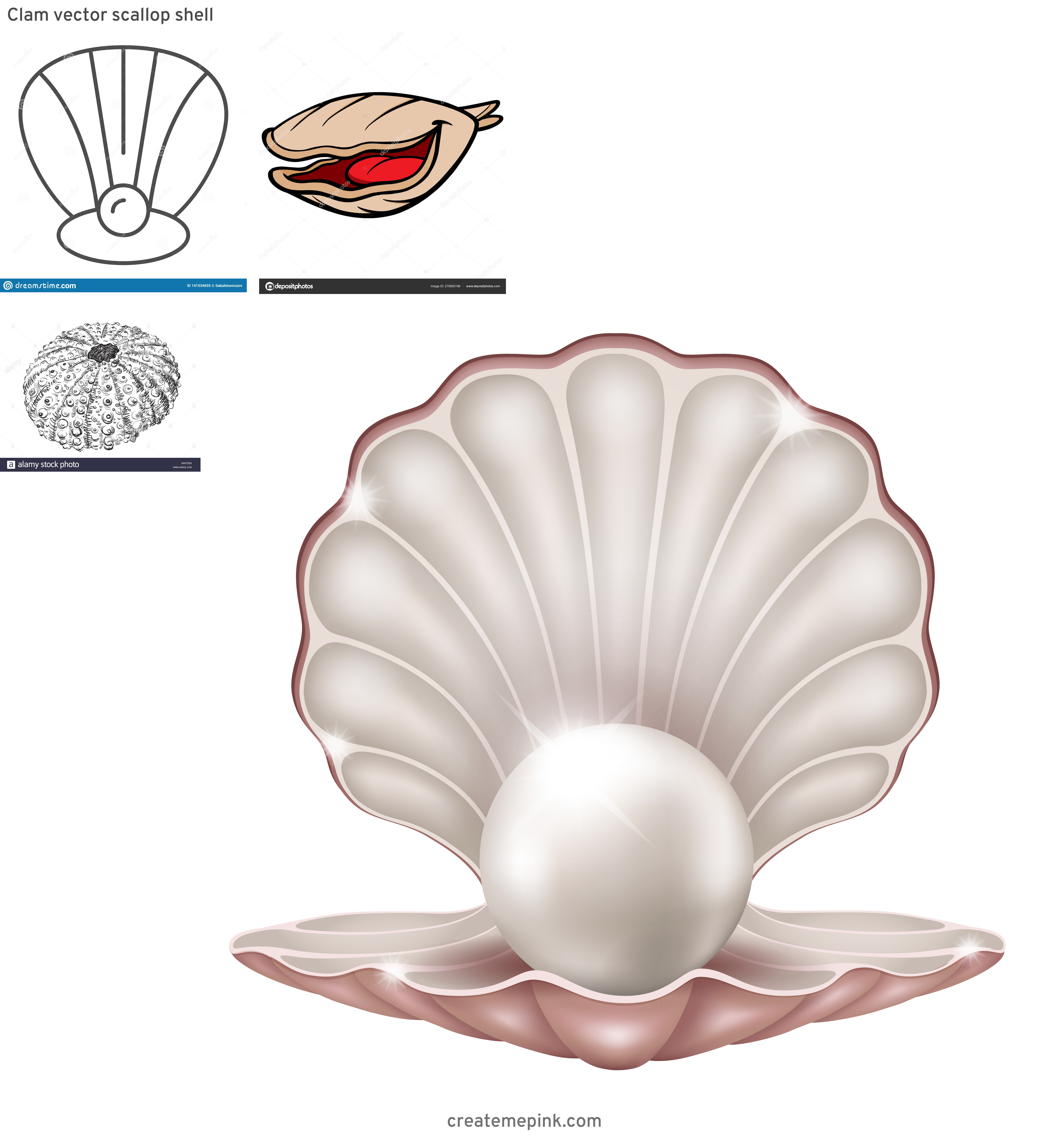 Clam Vector: Clam Vector Scallop Shell
