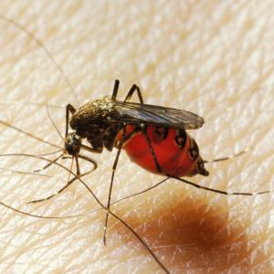 Borne Air Examples Transmission Andvector-Borne: Climate Crisis Could Expose Half A Billion More To Mosquito Borne Diseases