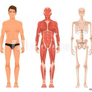 Vector Email Anatomy: Clipart Human Body Anatomy Basics