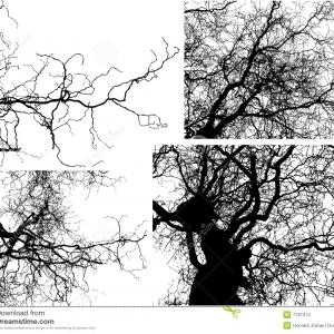 Black Vector Tree Branch: Clipart Tree Branch Silhouette