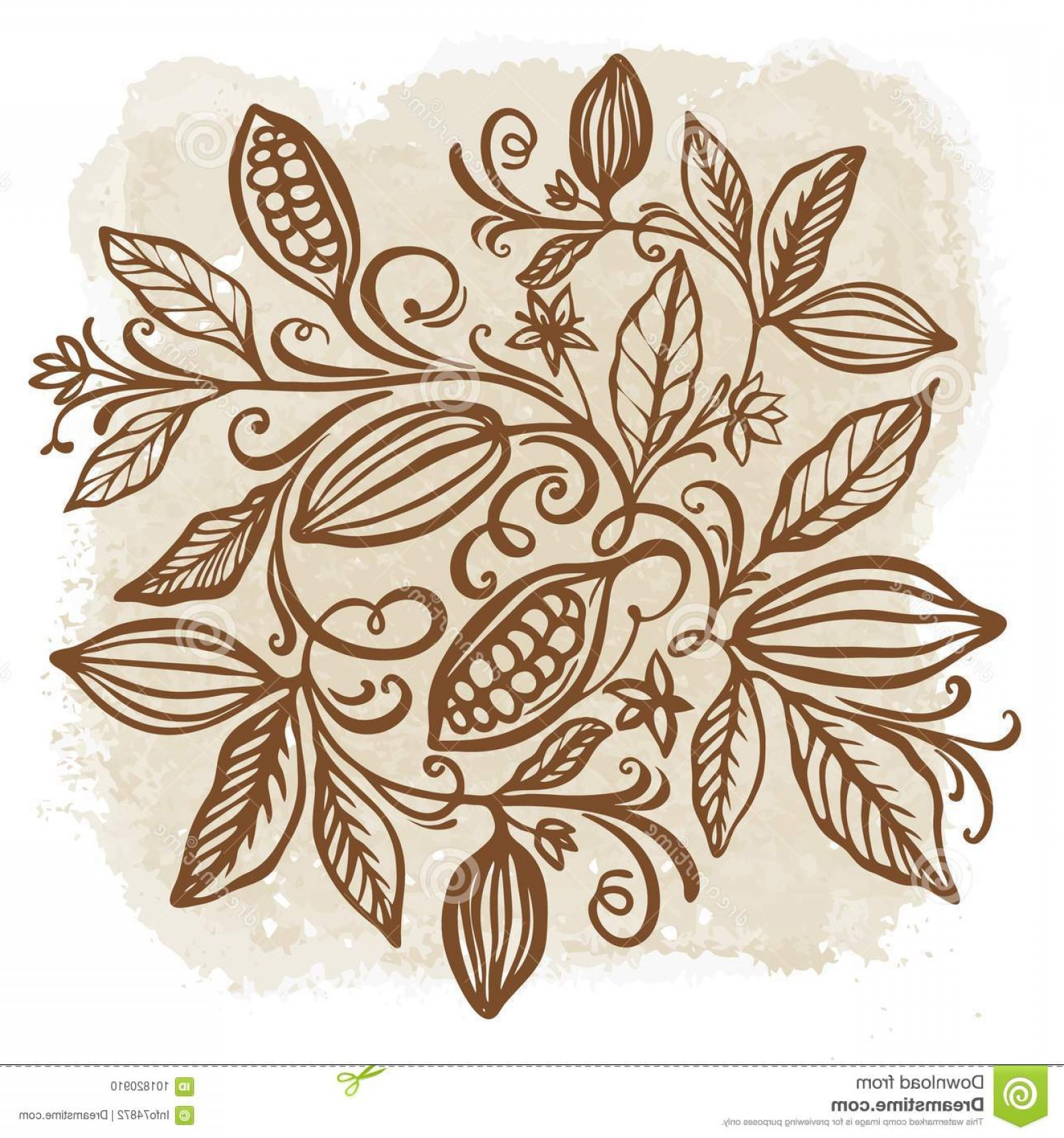 Chocolate Vector Plant: Cocoa Beans Illustration Chocolate Cocoa Beans Vector Illustra Cocoa Beans Illustration Chocolate Cocoa Beans Image