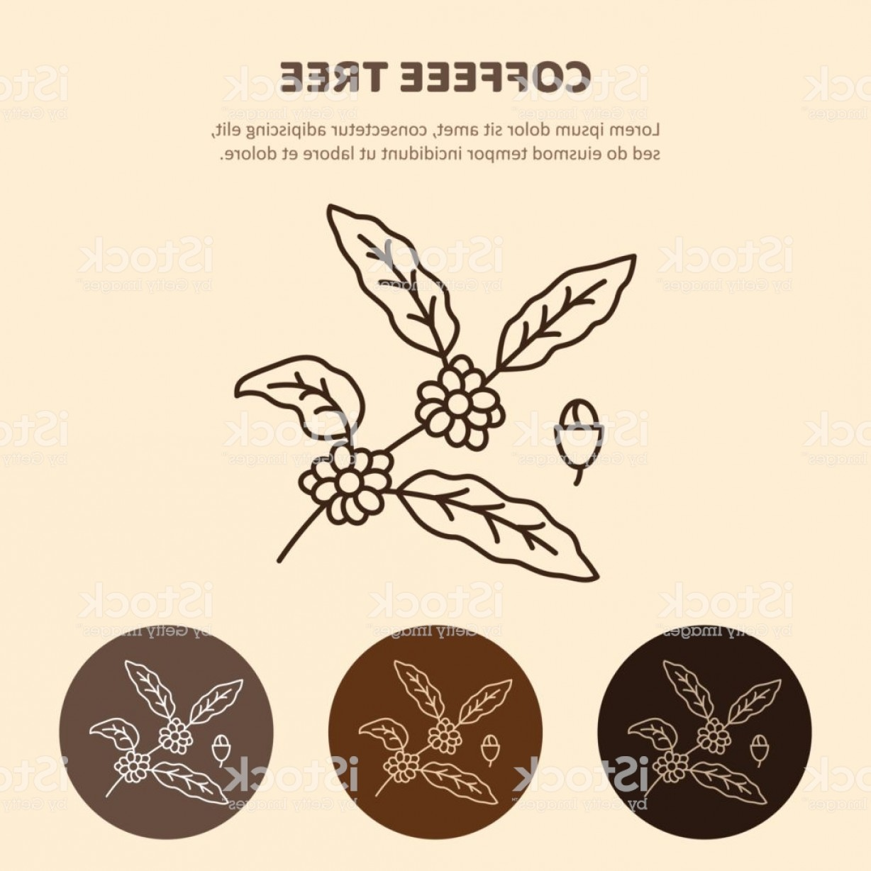 Coffee Tree Vector: Coffee Plant With Leaf Berry Coffee Bean Line Ico Gm