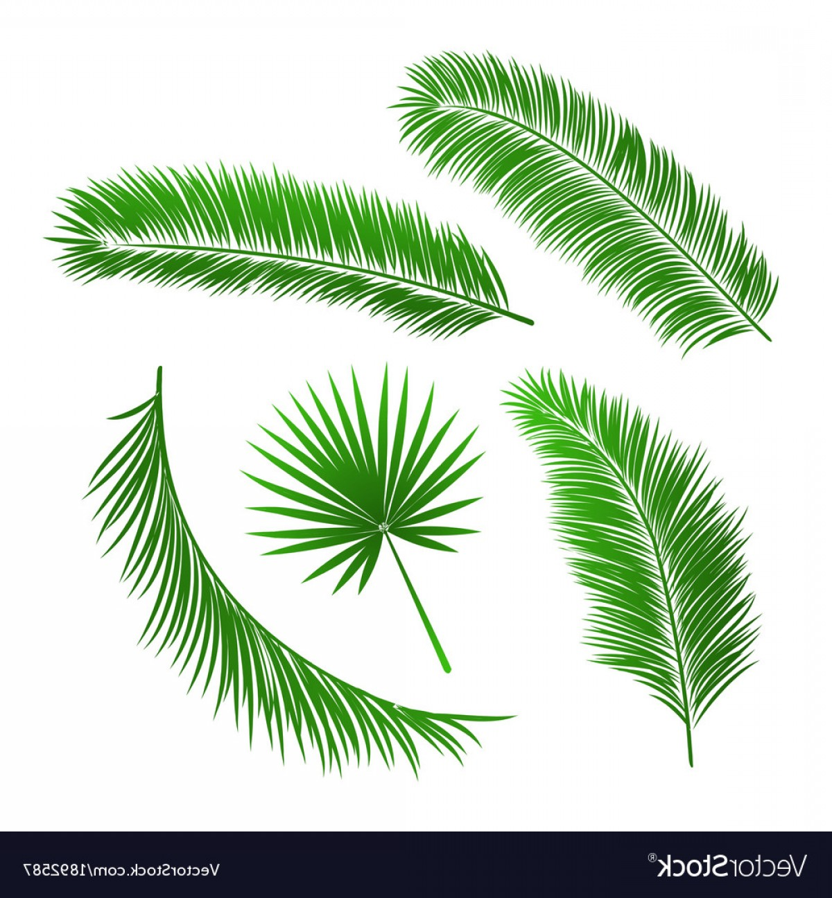 Pine Leaf Vector: Collection Of Palm Tree Leaves Vector
