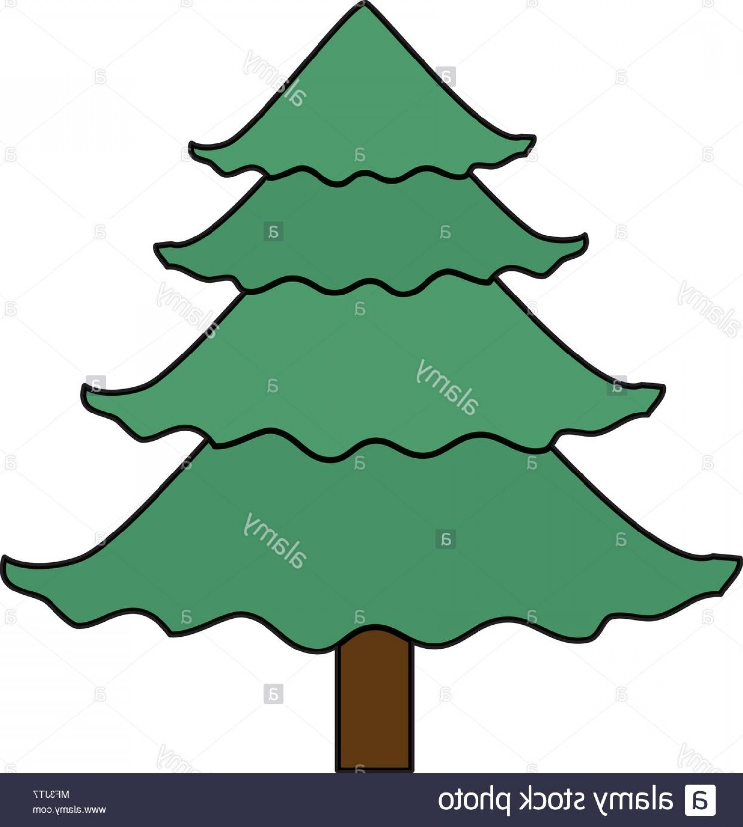 Pine Leaves Vector: Color Natural Pine Tree With Stalk And Leaves Vector Illustration Image