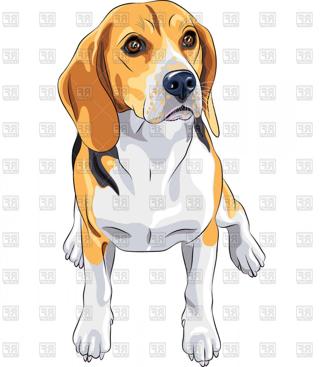 Vector Art Beagle Dog: Color Sketch Of The Sitting Dog Of Beagle Breed Vector Clipart