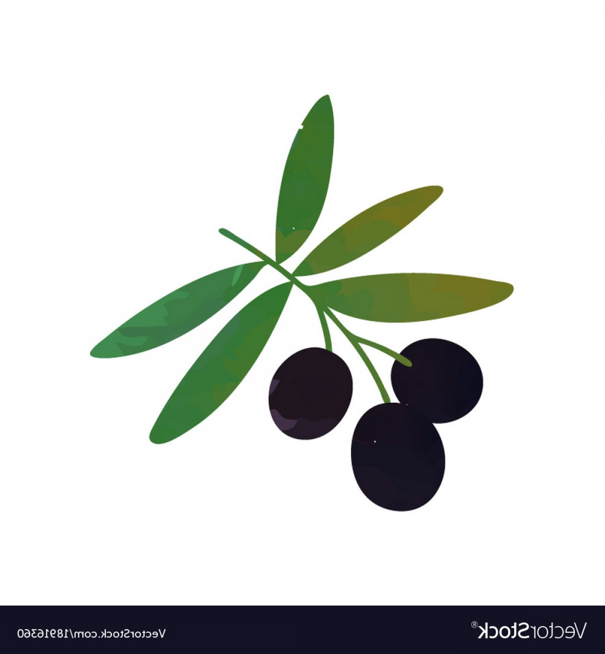 Olive Vector: Colored Isolated Icon Of Branch With Black Olives Vector